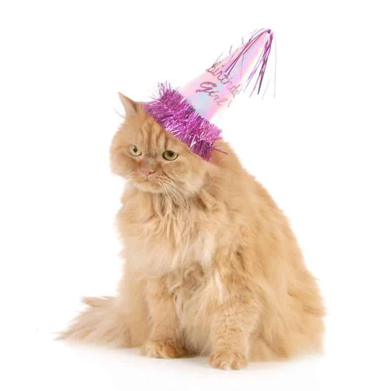 Cat Party Theme