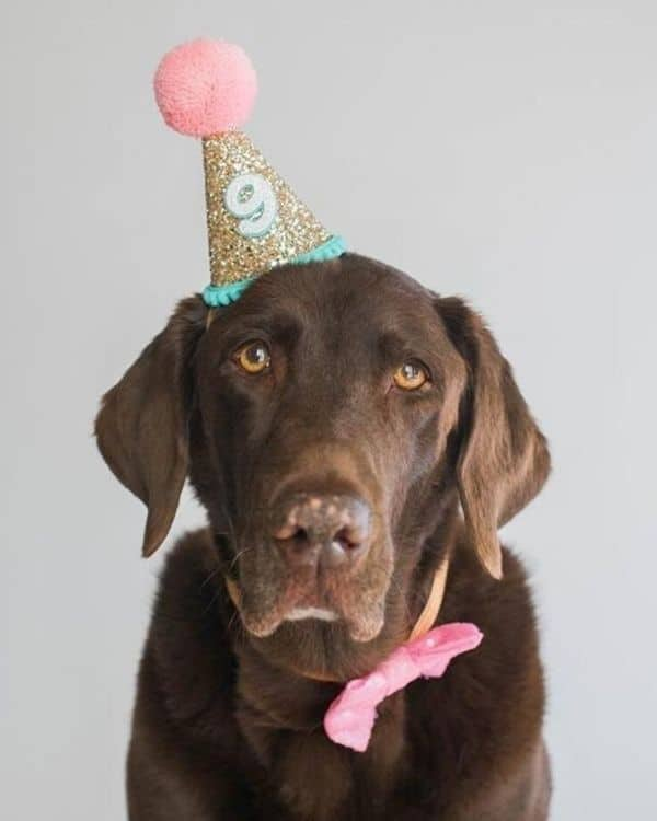 Dog Party Hat for Dog Birthday Party