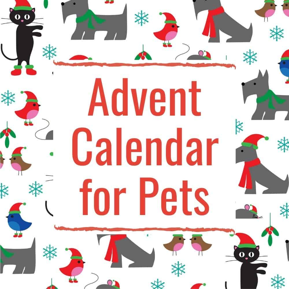 Pets Advent Calendar